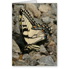 Butterfly, Greeting Card. Greeting Card