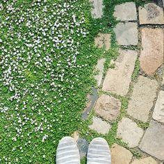 ひと雨ごとに緑が濃くなる、、、 #庭 #ナチュラルガーデン #ガーデニング #レンガの小径 #レンガ #グランドカバー #クラピア #リッピア #ヒメイワダレソウ #ペイビング #garden #diy