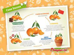 Oggi vi parliamo dei #mandarini! Ecco qualche #curiosità in più: http://www.dimmidisi.it/it/dimmidipiu/cose_buone/article/il_mandarino.htm - #dimmidisi #alimentazione #food #orange #frutta #fruit #infografica #infographic