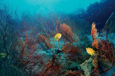 Los tesoros que oculta el 'Mundo submarino' | Ciencia |