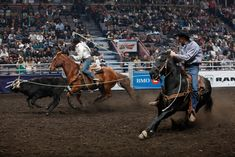 team roping | Farmfair Team Roping | Western Horse Review