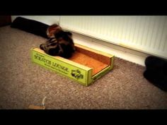 My Cat and Kitten enjoying their new scratcher from Specially4Cats  http://j.mp/scratchlounge