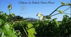 Château La Salade Saint Henri - Vins du Pic Saint Loup Languedoc France