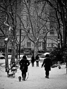Dog walking in Central Park