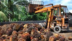 Palmöl-Studie-Redaktion