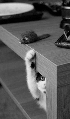 Vem cá, ratinho... Vem!