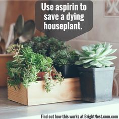 Aspirin functions like healthy steroids for plants—it increases root growth rates, activates natural defenses and prevents the formation of fungus. Get 11 more aspirin hacks at BrightNest.