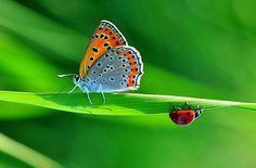 primer plano .de mariposas