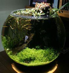 1000 images about aquascapes aquariums on pinterest for 10 gallon fish bowl