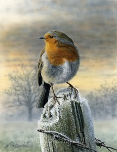 Robin in Winter by Nigel Artingstall Snow Pictures, Bird Pictures, Red Robin Bird, Wrens, Art Thou, Christmas Paintings, Painting Lessons, Old Postcards, Wildlife Art