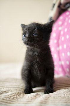 Kitten on beige -