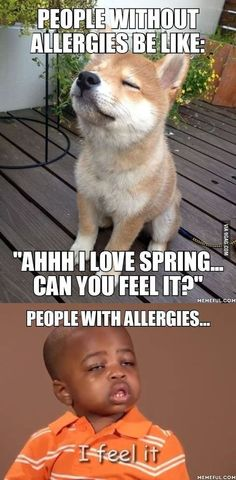 10 Pictures That Allergy Sufferers Will 100% Appreciate #funnypic.twitter.com/97H6Txogrk http://ibeebz.com