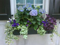 Garden Charleston Window Box