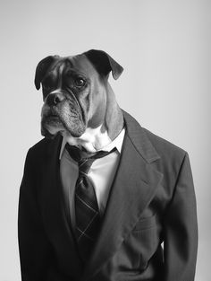 Molly the boss / Business Dog. R.I.P Molly.  Photo not Photoshopped.