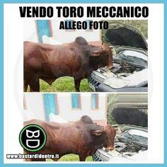 #bastardidentro #perfettamentebastardidentro #toro #meccanico www.bastardidentro.it