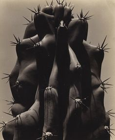 Brett Weston - Cactus, 1932