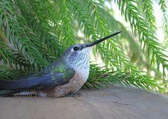 Hummingbird Stillness Photo by JulieMagersSoulen