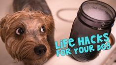 Caring for your dogs and making them feel loved doesn't have to be expensive. Here are some ideas for getting them to take their medicine, cooling them down during the summer, and a homemade flea remedy. My favorite hack is the pup-sicles.Watch for more helpful tips that you and your dog will love.