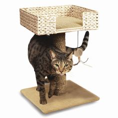 Ware Manufacturing has a full line of premium quality cat furniture, cat furniture accessories and cat toys for your furry feline Cat Basket, Cat Perch, Cat Shelves, Cat Condo, Pet Furniture, Find Pets, Pet Beds, Cat Toys, Cool Cats