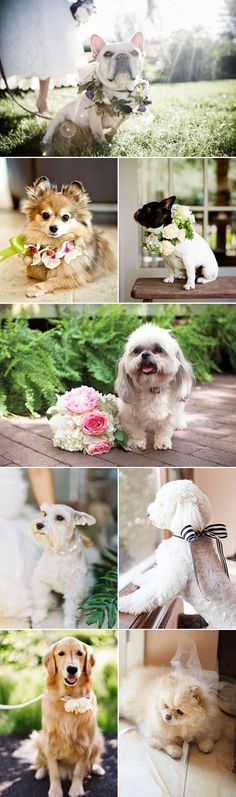 Wedding dogs- Don't know if the dogs will be with you guys, but the flowers are a cute idea.