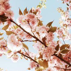 When nature is @pantone color of the year ✨ • • #mycreativebiz #dsart #myunicornlife  #livebeautifully #flashesofdelight #thatsdarling #creativityfound #abmhappylife #pnw #homeinthestudio #ohwowyes #thehappynow #livethelittlethings #liveauthentic #lovelysquares #acolorstory #sweetdreamsdlf #denydesigns #darlingmovement #acolorstory