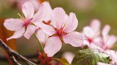 Zahradníkův kalendář na celý rok: kdy sít a sázet zeleninu,…   iReceptář.cz Plants, Plant, Planets