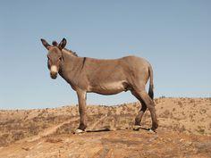 #donkey #desert