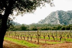 Inspired by the wines of Provence : The Good Life France http://www.thegoodlifefrance.com/inspired-by-the-wines-of-provence/