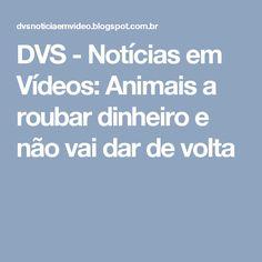 DVS - Notícias em Vídeos: Animais a roubar dinheiro e não vai dar de volta