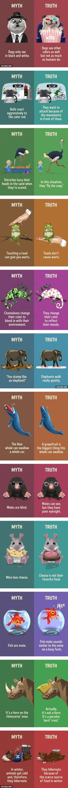 12 myths about animals that we still believe http://ibeebz.com