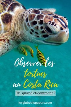 Découvrir tous les meilleurs spots et périodes pour observer les tortues au Costa Rica Costa Rica Travel, Voyage Costa Rica, San Jose, Costa Rica Pais, Animal Consciousness, Santa Teresa Costa Rica, Best Beaches To Visit, Responsible Travel, Ocean Photography