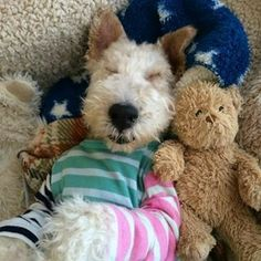 Master of puppies Cute Puppies, Cute Dogs, Dogs And Puppies, Silly Dogs, Funny Dogs, Wire Fox Terrier, Fox Terriers, Dog Pictures, Animal Pictures