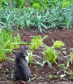 Prevent roaming felines from making your vegetable bed their litter box with this selection of deterrents.