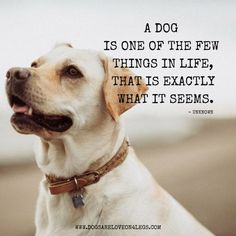 10 Greatest Dog Quotes That Prove A Dog Is The Best Gift - Dog Love ♥ - prove art breeds cutest funny training bilder lustig welpen Dog Quotes Love, Dog Quotes Funny, Funny Dogs, Cute Dogs, Love For Animals Quotes, Dog Best Friend Quotes, Quotes On Dogs, Sweet Dog Quotes, Puppy Quotes