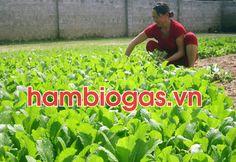 loi ich cua biogas trong nong nghiep