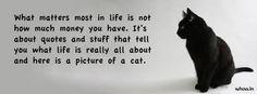 Black Cat Facebook Cover