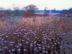 Piet Oudolf~winter interest at Wisley
