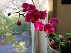 Orkide bakimi konusunda destek kaynak