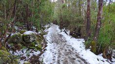Photo of the Week - Frozen Pathway