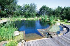 Formes de piscine naturelle