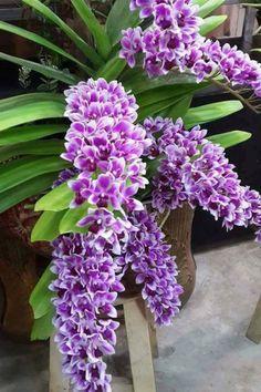 Help Make Your Garden Special - Easy Garden Plants Orchids Garden, Orchid Plants, Exotic Plants, Exotic Flowers, Amazing Flowers, Purple Flowers, Beautiful Flowers, Purple Orchids, Growing Orchids