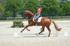 Now THAT is a collected canter. || chestnut dressage