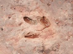 Dinosaur Tracks in Navajo Nation - Tuba City
