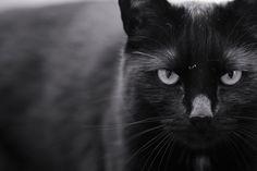 Der böse Blick der schwarzen Katze