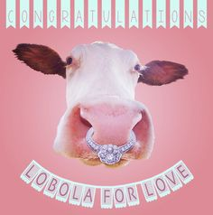 Lobola Love Wedding Card for Kinky Rhino Greeting Cards in South Africa Africa Quotes, Afrikaans, Badges, Kinky, Wedding Cards, South Africa, Cow, Birthdays, Card Making