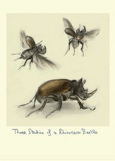 THREE STUDIES OF A RHINOCEROS BEETLE for The Encyclopaedia of plants and Animals with Unusual Names by Julian Williams  Dynastinae or rhinoceros beetles are a subfamily of the scarab beetle family (Scarabaeidae). Other common names – some for particular groups of rhinoceros beetles – are for example Hercules beetles, unicorn beetles or horn beetles. Over 300 species of rhinoceros beetles are known.