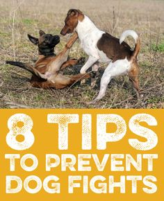 8 Tips to prevent dog fights!