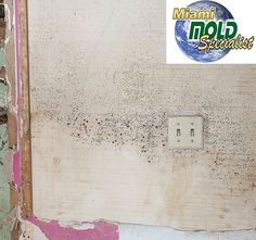 mi&t mold inspection reviews