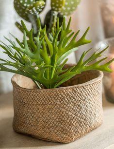 Earthenware, Flower Pots, Sea Shells, Caribbean, Planter Pots, Make It Yourself, Plants, Spring Summer, Beige