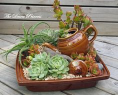 Succulent Mini Garden Design By The Desert Princess Facebook Thedesertprincess1006